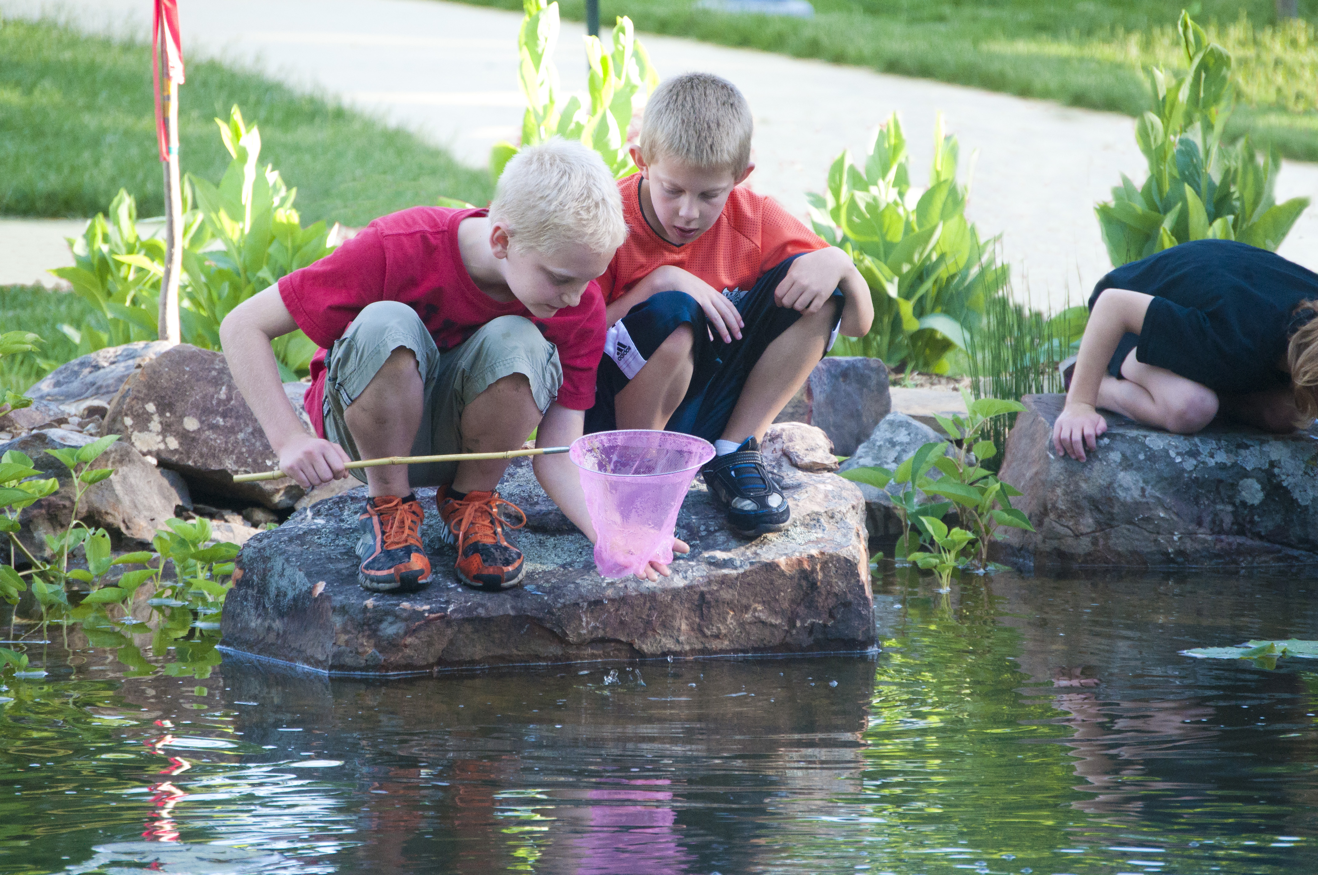 Two boys look into a net to see what they caught in the pond