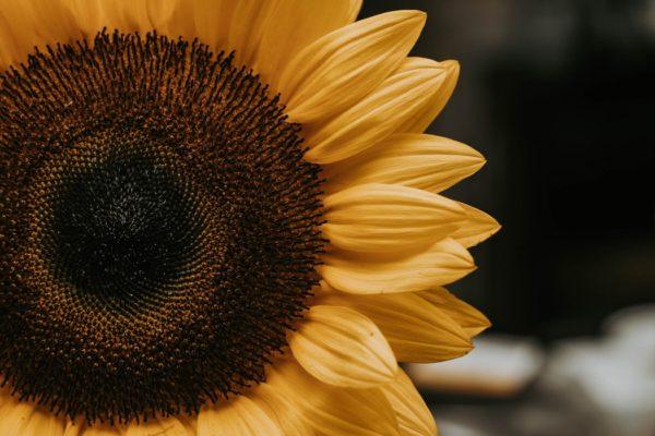 Sunflower Science @ Kansas Children's Discovery Center | Topeka | Kansas | United States
