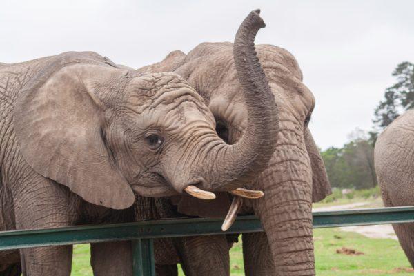 Engineer an Elephant Trunk: Kenya's Kids @ Kansas Children's Discovery Center
